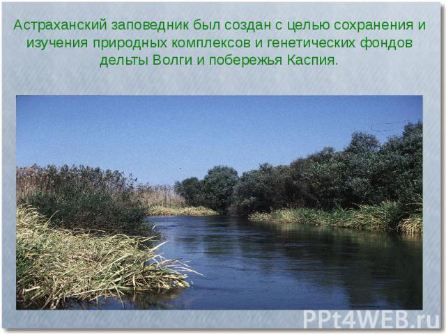 Астраханский заповедник был создан с целью сохранения и изучения природных комплексов и генетических фондов дельты Волги и побережья Каспия.