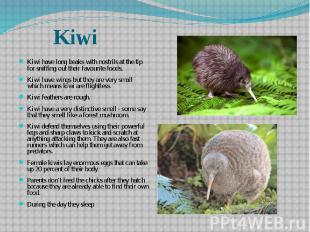 Kiwi have long beaks with nostrils at the tip for sniffing out their favourite f
