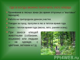 ГДЕ И КОГДА МОЖНО ПОЛУЧИТЬ УКУС КЛЕЩА Проживание в лесных зонах (во время отпуск