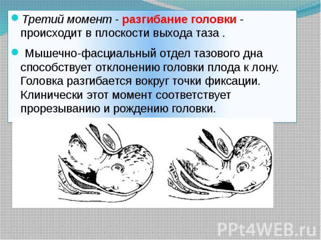Третий момент-разгибание головки- происходит в плоскости выхода таза . Третий момент-разгибание головки- происходит в плоскости выхода таза . Мышечно-фасциальный отдел тазового дна способствует отклонению головки …