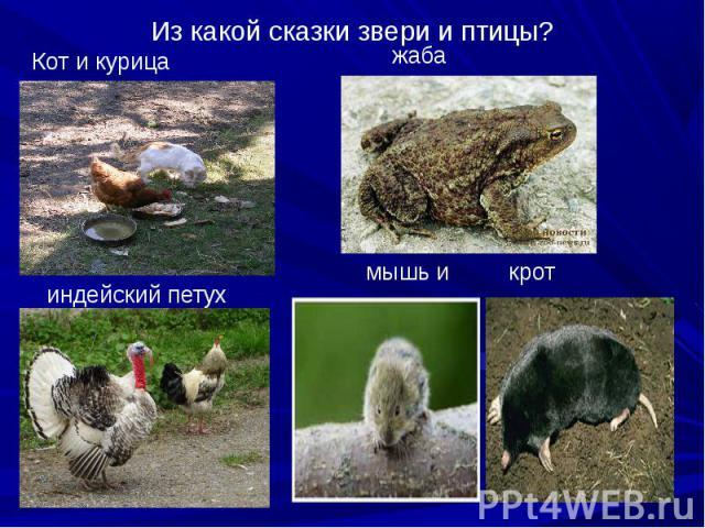 Кот и курица Кот и курица