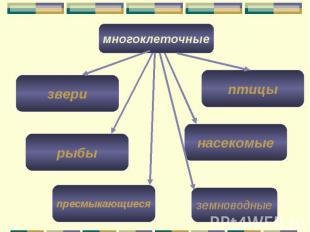 многоклеточные