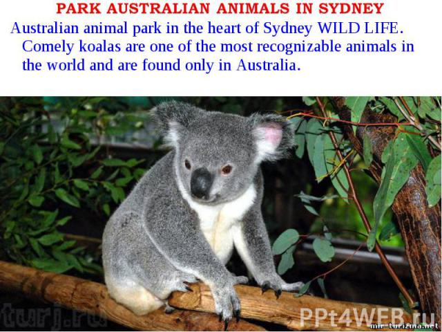 Australian animal park in the heart of Sydney WILD LIFE. Comely koalas are one of the most recognizable animals in the world and are found only in Australia.Australian animal park in the heart of Sydney WILD LIFE. Comely koalas are one of the most r…