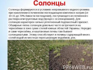 Солонцы формируются в условиях непромывного водного режима при накоплении в почв