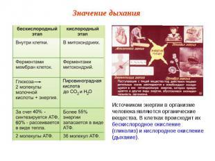Источником энергии в организме человека являются органические вещества. В клетка
