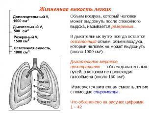 Объем воздуха, который человек может выдохнуть после спокойного выдоха, называет