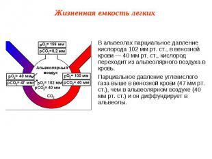В альвеолах парциальное давление кислорода 102 мм рт. ст., в венозной крови — 40