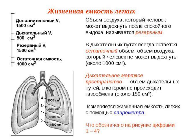Объем воздуха, который человек может выдохнуть после спокойного выдоха, называется резервным.В дыхательных путях всегда остается остаточный объем, объем воздуха, который человек не может выдохнуть (около 1000 см3).Дыхательное мертвое пространство — …