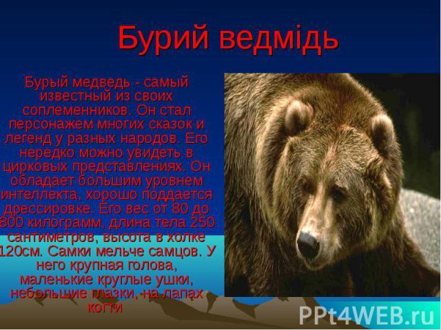 Бурий ведмідь Бурый медведь - самый известный из своих соплеменников. Он стал персонажем многих сказок и легенд у разных народов. Его нередко можно увидеть в цирковых представлениях. Он обладает большим уровнем интеллекта, хорошо поддается дрессиров…