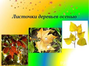 Листочки деревьев осенью
