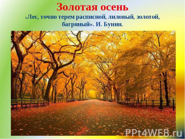 Золотая осень «Лес, точно терем расписной, лиловый, золотой, багряный». И. Бунин.