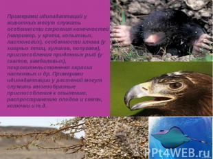 Примерами идиоадаптаций у животных могут служить особенности строения конечносте