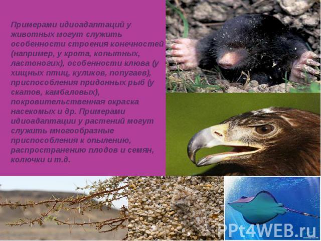 Примерами идиоадаптаций у животных могут служить особенности строения конечностей (например, у крота, копытных, ластоногих), особенности клюва (у хищных птиц, куликов, попугаев), приспособления придонных рыб (у скатов, камбаловых), покровительственн…