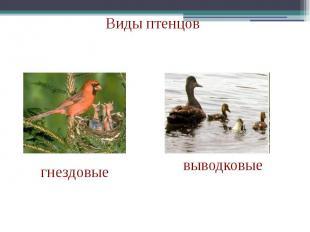 Виды птенцов
