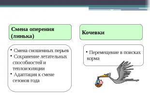 Послегнездовой период Смена оперения (линька) Смена сношенных перьев Сохранение
