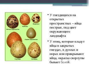 Разнообразие формы и цвета яиц У гнездящихся на открытых пространствах – яйца пе