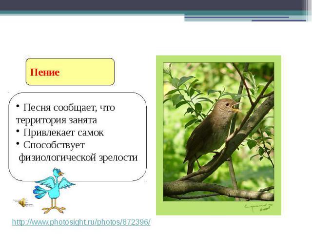 Песня сообщает, что территория занята Привлекает самок Способствует физиологической зрелости Ритуальное поведение птиц