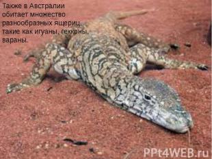 Также в Австралии обитает множество разнообразных ящериц, такие как игуаны, гекк