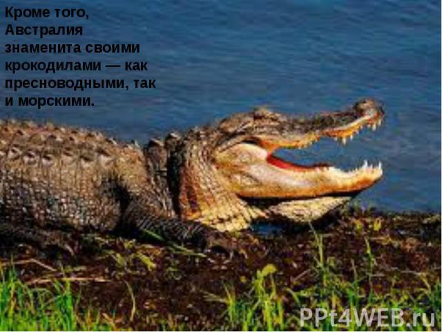 Кроме того, Австралия знаменита своими крокодилами — как пресноводными, так и морскими.