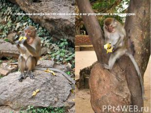 Обезьяны всегда чистят свои бананы и не употребляют в пищу шкурки.