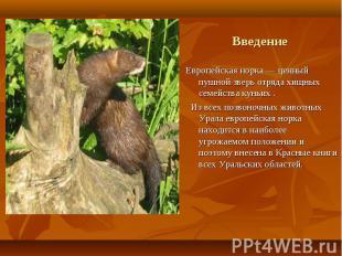 Европейская норка — ценный пушной зверь отряда хищных семейства куньих .