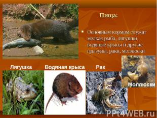 Основным кормом служат мелкая рыба, лягушки, водяные крысы и другие грызуны, рак