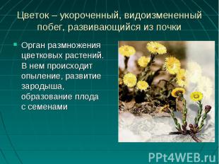 Орган размножения цветковых растений. В нем происходит опыление, развитие зароды