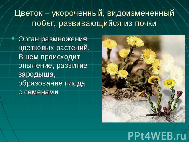 Орган размножения цветковых растений. В нем происходит опыление, развитие зародыша, образование плода с семенамиОрган размножения цветковых растений. В нем происходит опыление, развитие зародыша, образование плода с семенами