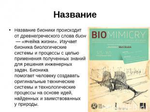 Название Название бионики происходит отдревнегреческогословаби