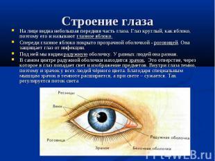 На лице видна небольшая передняя часть глаза. Глаз круглый, как яблоко, поэтому