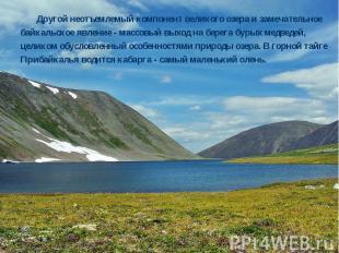Другой неотъемлемый компонент великого озера и замечательное байкальское явление