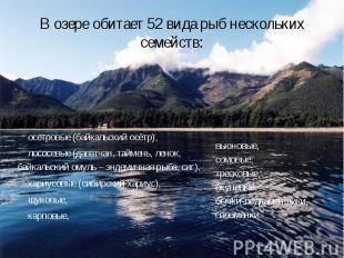 В озере обитает 52 вида рыб нескольких семейств: осетровые (байкальский осётр),
