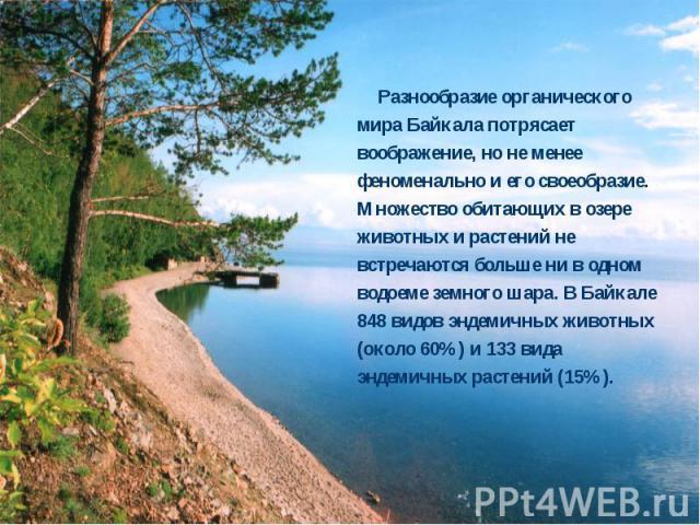 Разнообразие органического мира Байкала потрясает воображение, но не менее феноменально и его своеобразие. Множество обитающих в озере животных и растений не встречаются больше ни в одном водоеме земного шара. В Байкале 848 видов эндемичных животных…