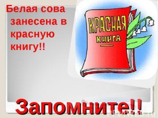 Белая сова занесена в красную книгу!!