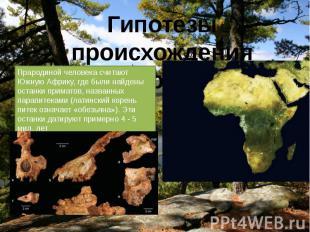 Прародиной человека считают Южную Африку, где были найдены останки приматов, наз