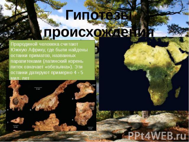 Прародиной человека считают Южную Африку, где были найдены останки приматов, названных парапитеками (латинский корень питек означает «обезьяна»). Эти останки датируют примерно 4 - 5 мил. лет