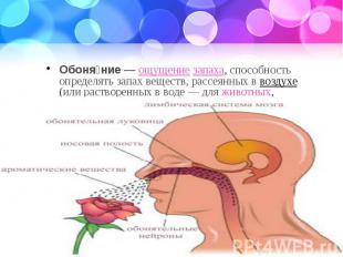 Обоня ние— ощущение запаха, способность определять запахвеществ, рас
