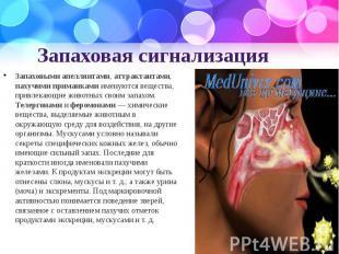 Запаховая сигнализация Запаховыми апеллянтами, аттрактантами, пахучими приманкам