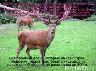 Много других животных способны тем или иным образом использовать ветер для своих