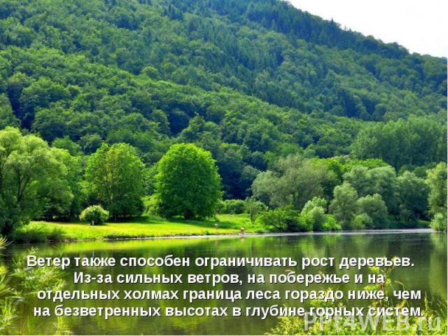 Ветер также способен ограничивать рост деревьев. Из-за сильных ветров, на побережье и на отдельных холмахграница лесагораздо ниже, чем на безветренных высотах в глубине горных систем.