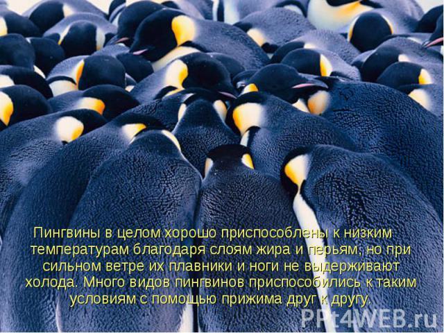 Пингвиныв целом хорошо приспособлены к низким температурам благодаря слоям жира и перьям, но при сильном ветре их плавникии ноги не выдерживают холода. Много видов пингвинов приспособились к таким условиям с помощью прижима друг к другу.…