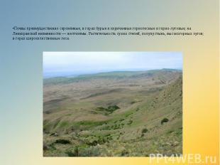 •Почвы преимущественно серозёмные, в горах бурые и коричневые горнолесные и горн