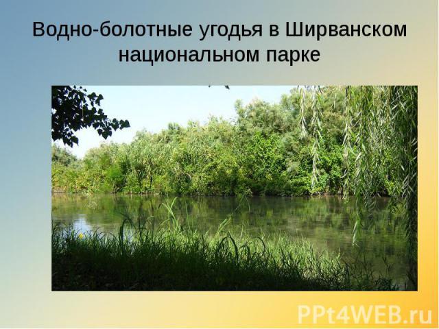 Водно-болотные угодья в Ширванском национальном парке
