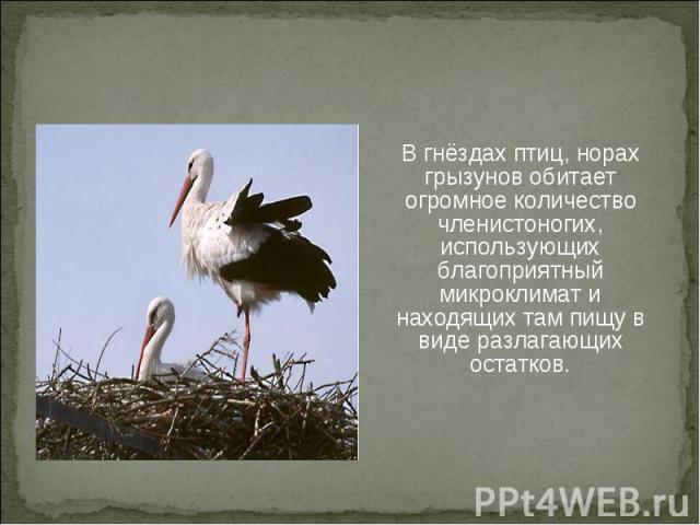 В гнёздах птиц, норах грызунов обитает огромное количество членистоногих, использующих благоприятный микроклимат и находящих там пищу в виде разлагающих остатков.В гнёздах птиц, норах грызунов обитает огромное количество членистоногих, использующих …