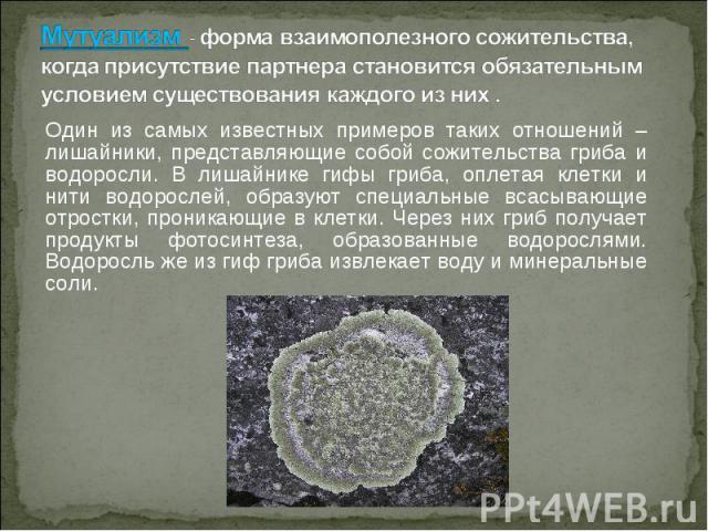 Один из самых известных примеров таких отношений – лишайники, представляющие собой сожительства гриба и водоросли. В лишайнике гифы гриба, оплетая клетки и нити водорослей, образуют специальные всасывающие отростки, проникающие в клетки. Через них г…