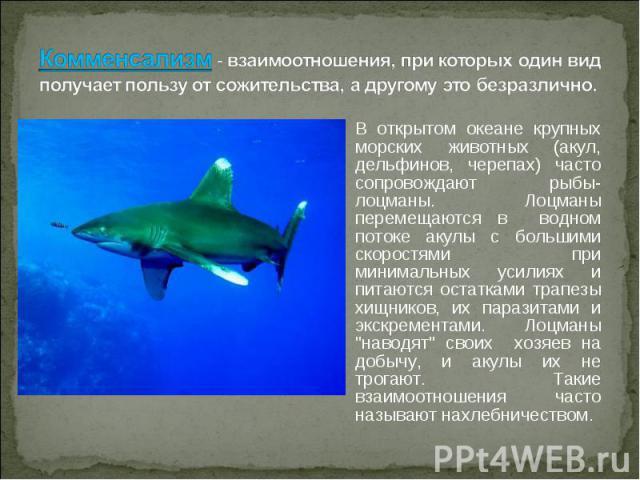 В открытом океане крупных морских животных (акул, дельфинов, черепах) часто сопровождают рыбы-лоцманы. Лоцманы перемещаются в водном потоке акулы с большими скоростями при минимальных усилиях и питаются остатками трапезы хищников, их паразитами и эк…