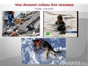 Собаки- спасатели Что делают собаки для человека