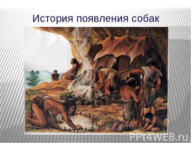 История появления собак