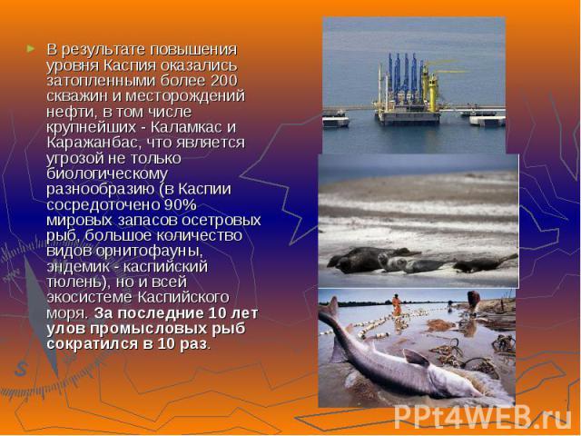 В результате повышения уровня Каспия оказались затопленными более 200 скважин и месторождений нефти, в том числе крупнейших - Каламкас и Каражанбас, что является угрозой не только биологическому разнообразию (в Каспии сосредоточено 90% мировых запас…