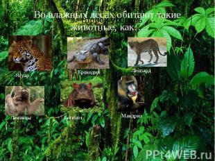 Во влажных лесах обитают такие животные, как…